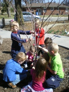 Coloring the trees with chalk!