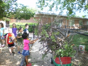 Cleaning up the dead branches on the playground so we have a safer place to play